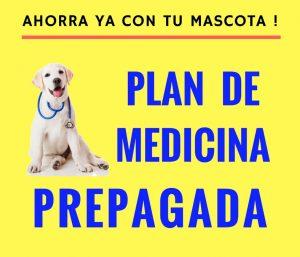 MEDICINA PREPAGADA PARA MASCOTAS